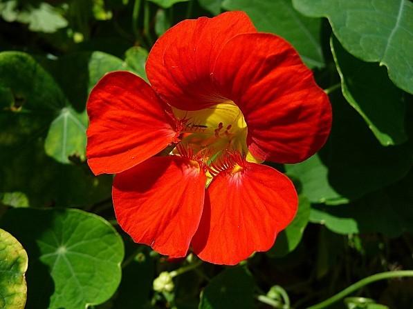 Nature31.08.12-059.JPG