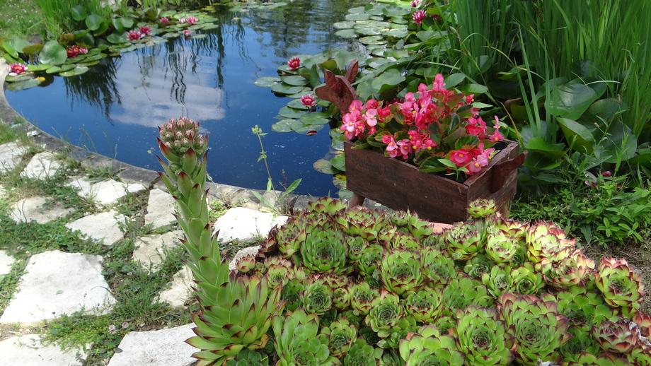 Un Beau Jardin en Eté...
