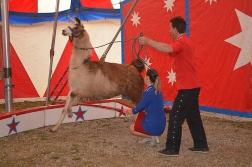 Montigny fait son cirque