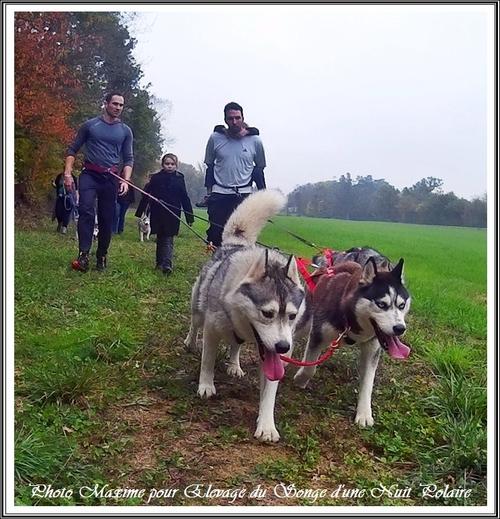 Cani-rando de Moulayrès (25 octobre 2015)