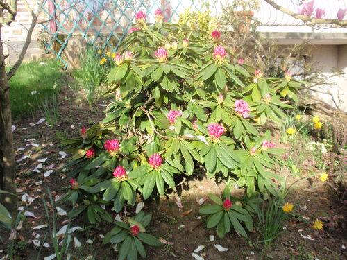 Encore mon jardin...
