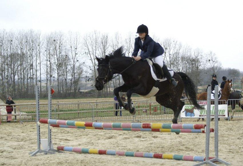 Saut d 39 obstacles thehorses - Frison saut d obstacle ...