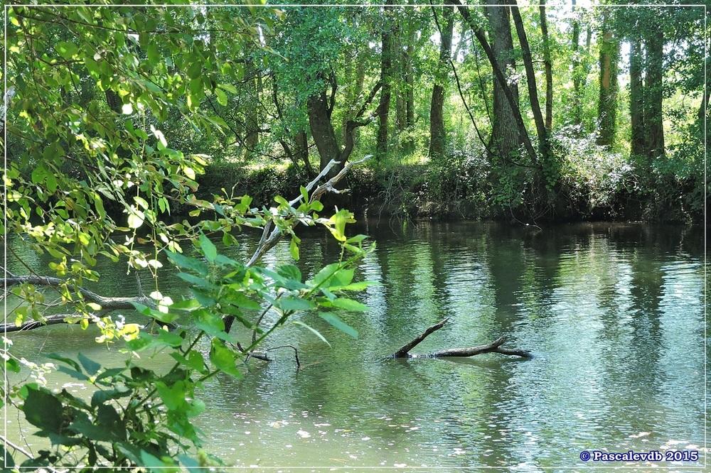 Du pont de l'Eyga aux rives de la Leyre - Août 2015 - 5/6