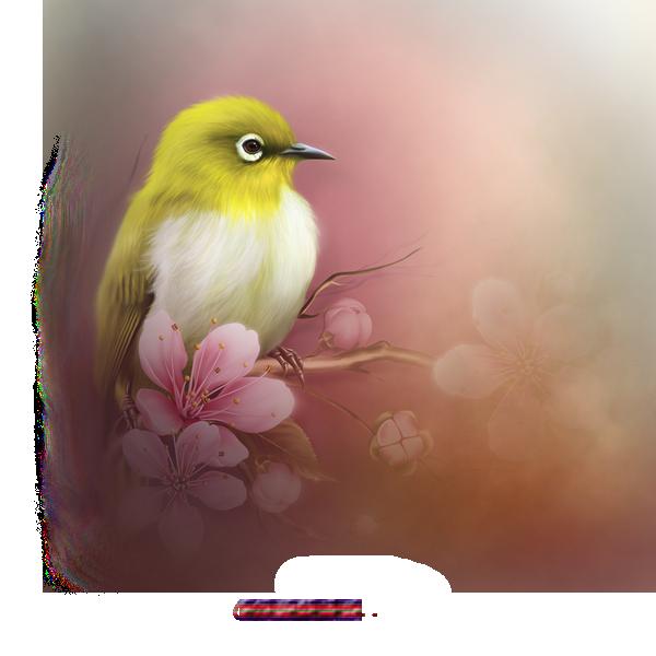 Oiseau 2021 misted1