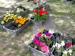 Vente de fleurs - avril 2014