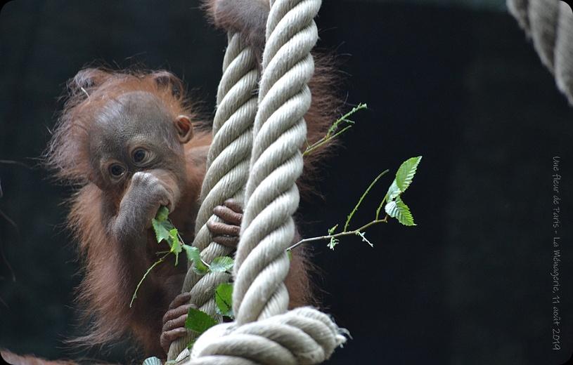 La Ménagerie, Zoo du Jardin des Plantes : Théodora et sa fille Java
