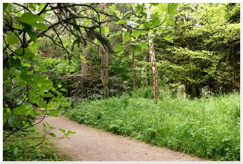 Jardin Albert-Kahn. Boulogne Billancourt 2/2