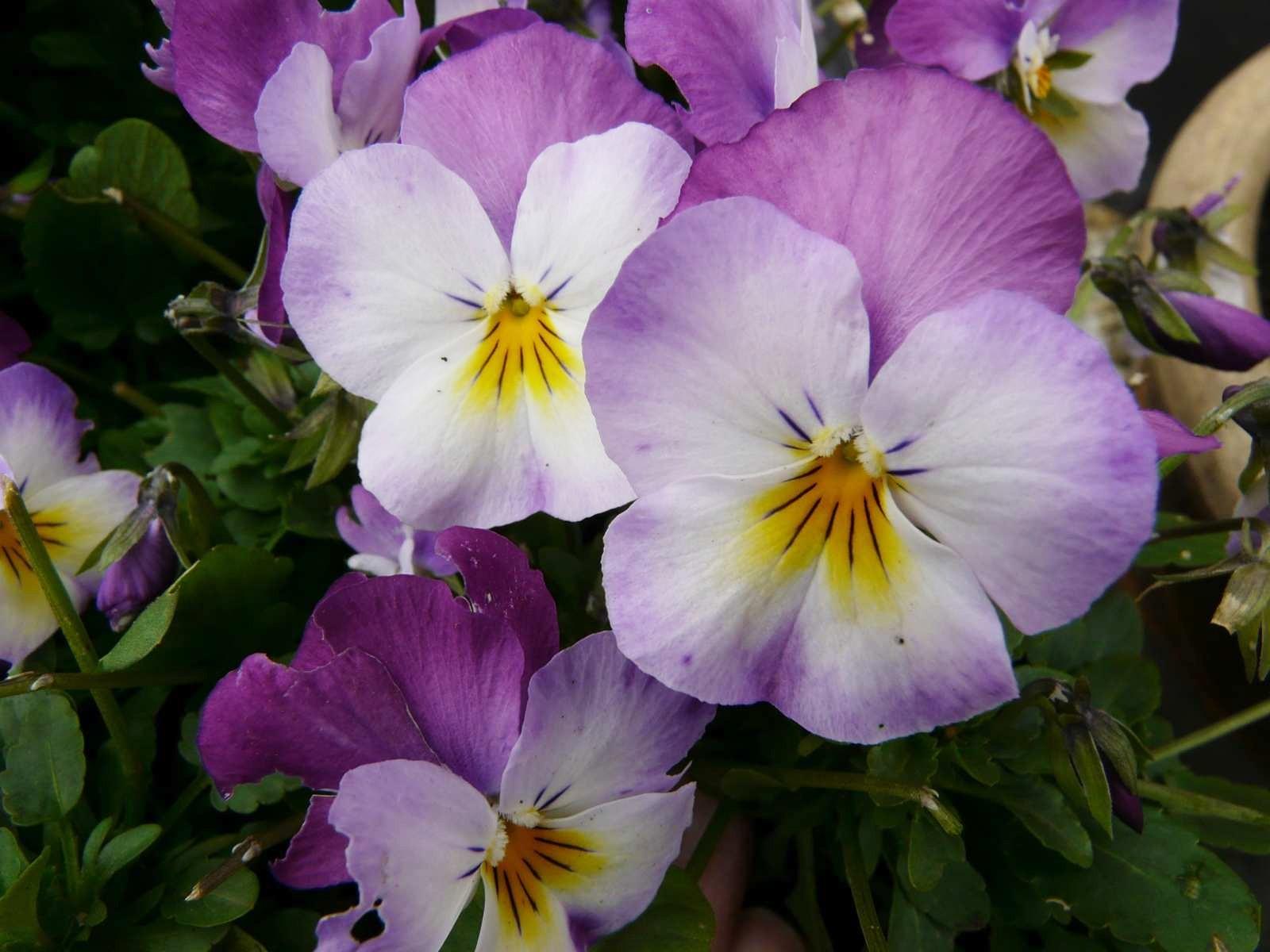 Les fleurs rares les nom de fleurs for Fleurs et fleurs