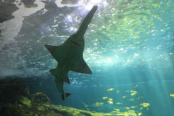 aquarium La Rochelle(15)