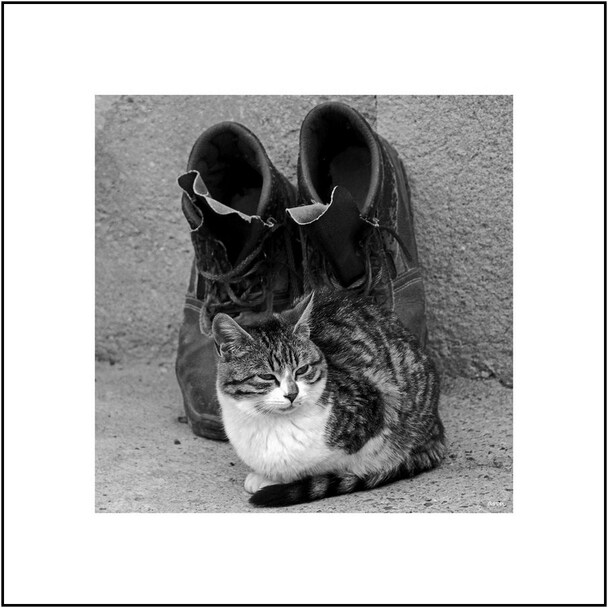 Chats des villages