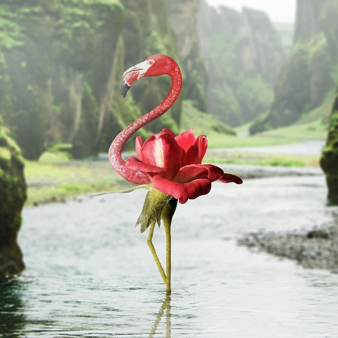 photo manipulation flamingo