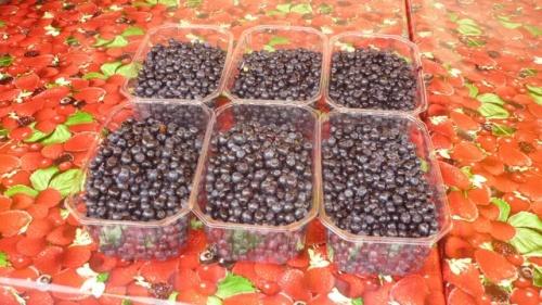 Ici on vend de beaux fruits et légumes pas cher