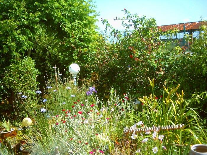 de retour,je vous invite  dans mon jardin pour cette fin du mois de juillet