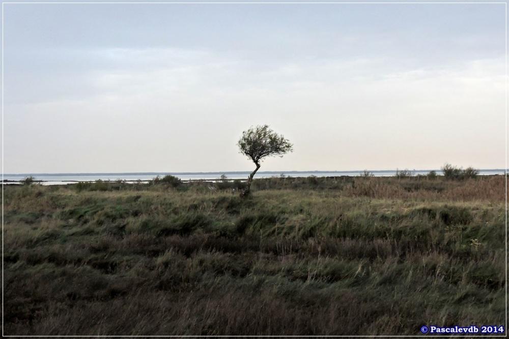Sur le sentier du littoral de Gujan Mestras à La Hume - 3/4