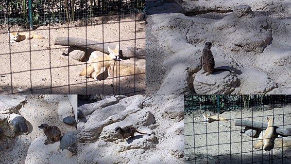 2012-03-26-zoo8.jpg