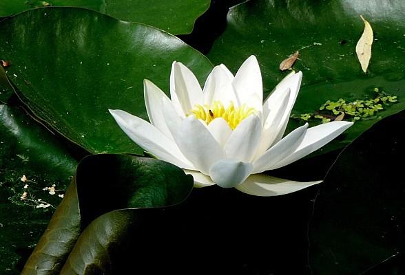 fleurs1.06-116.JPG