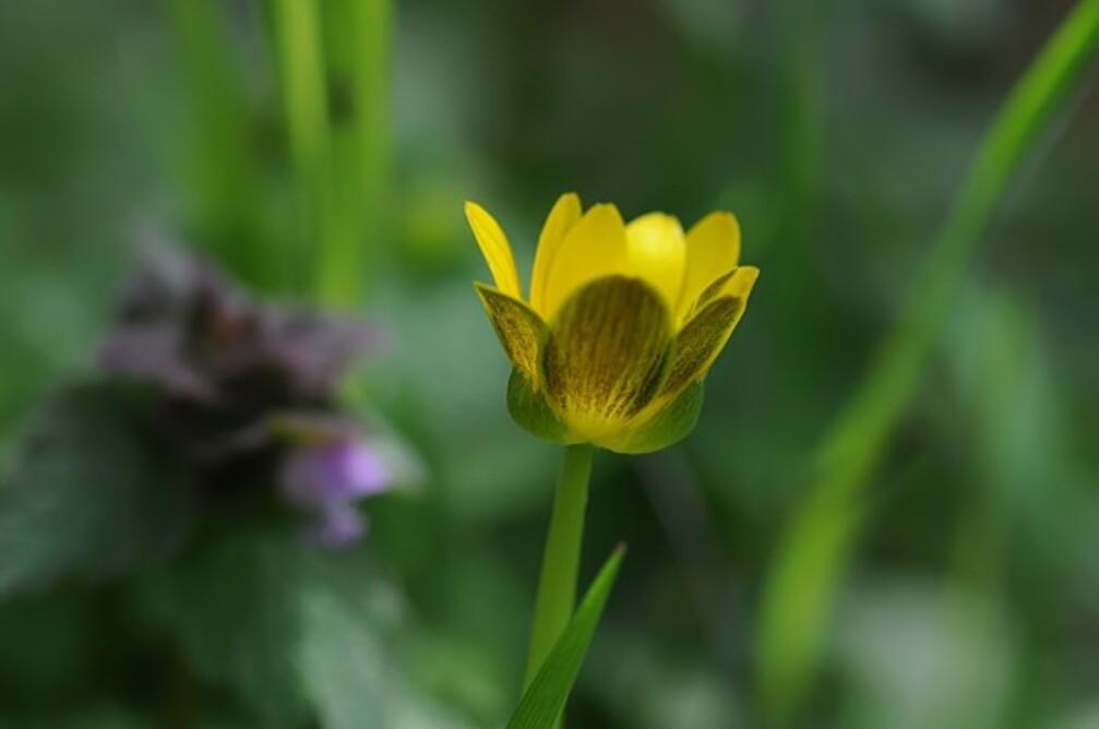 Fleurs-12-5097.jpg