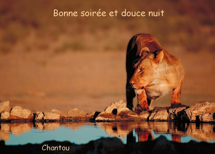 CHANTOUVIVELAVIE : BONSOIR - 18 06 2019