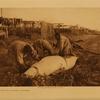 59 Cutting up a beluga Kotzebu