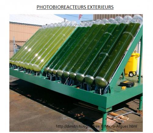 Les micro algues le biocarburant base de micro algues for Temperature culture interieur