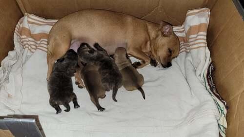 Bébés Chiots