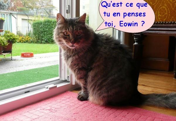 pluie-et-chats-03.JPG