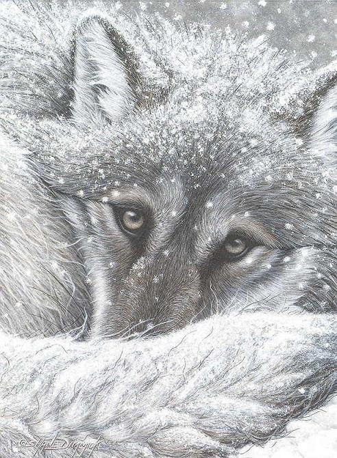 Un loup avec un joli regard