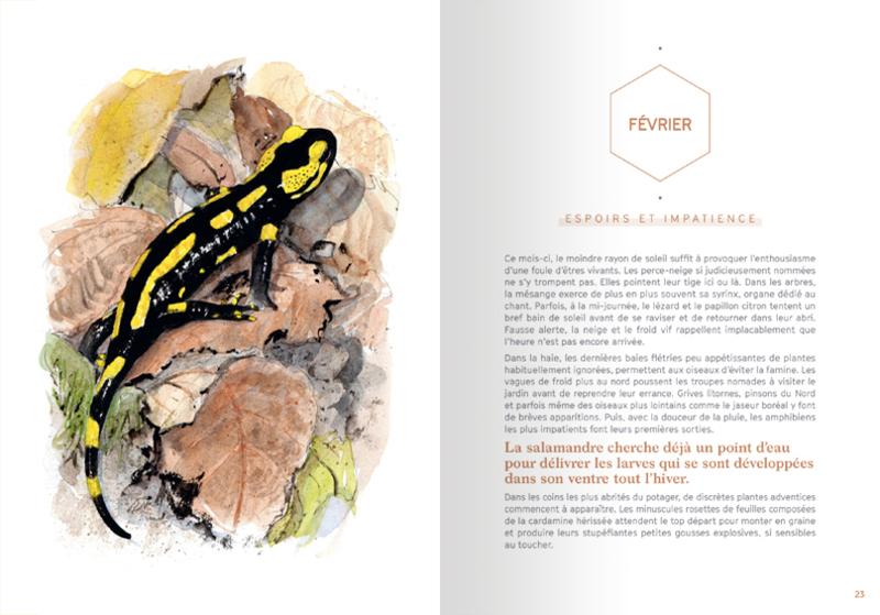 L'agenda 2020 Salamandre-terre vivante