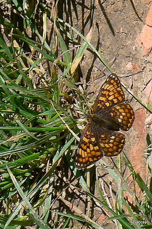 Un beau papillon en mai