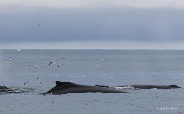 Encore un peu de baleines