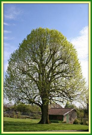 La silhouette des arbres ...