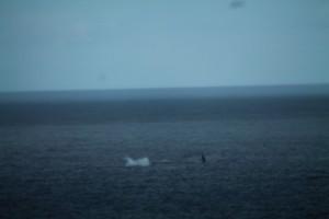 baleine-2884.JPG