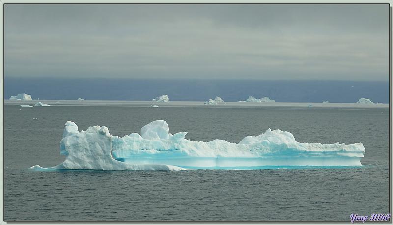 Derniers icebergs du jour, mais demain ce sera : icebergs, icebergs, icebergs ... - Fjord Uummannaq - Groenland