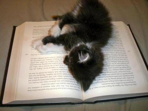 Des chats et des livres suite