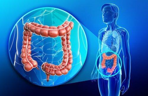 Jus-anti-inflammatoire-et-reparateur-de-l'intestin500x324