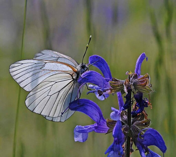 Insectes-papillons--4-4126.jpg