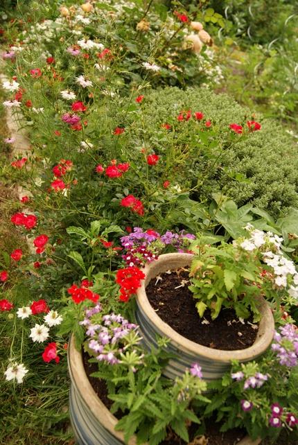 Mon jardin landais le 1/6/2012