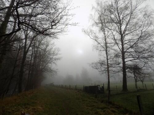 balade sous un baldaquin de brume