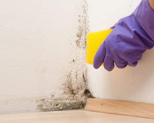 Corona Mold Inspection - Important To The Success Of Your Business