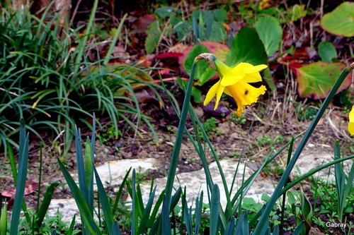 Les fleurs de mon jardin en mars …