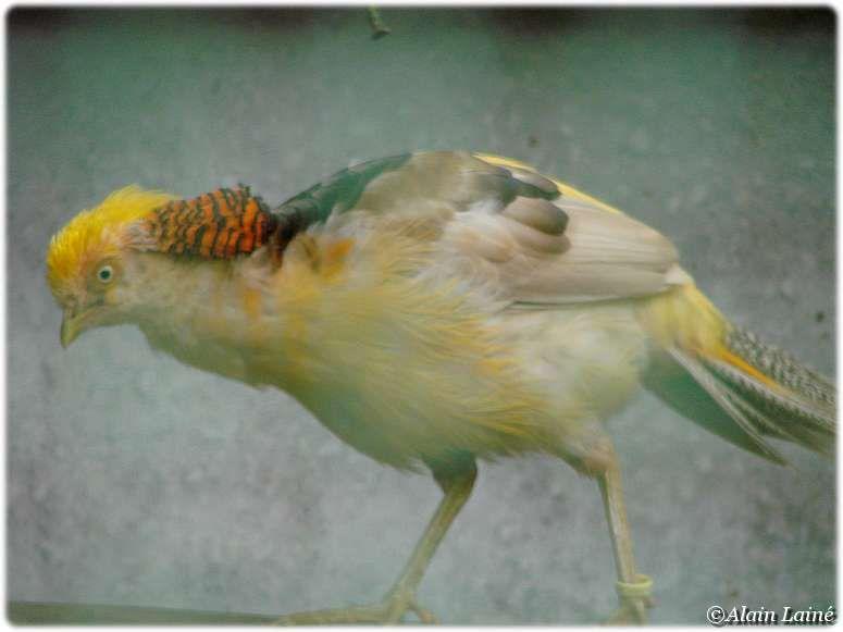 Parc_ornithologique_17Juil09_14
