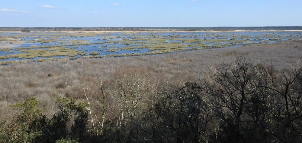 Balade à l'étang de Cousseau...