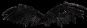 tube petites ailes grises ou noires