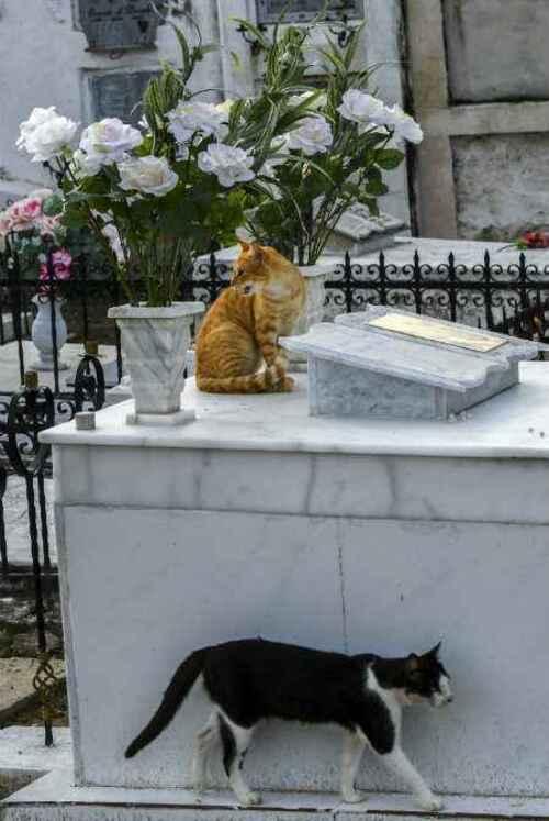 Quand des chats veillent sur une tombe...