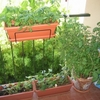 petit-jardin potager