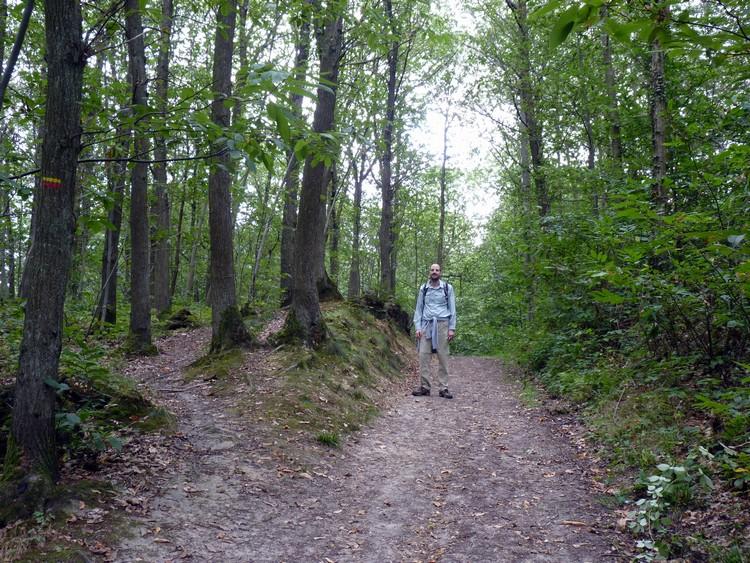 Forêt de Louveciennes