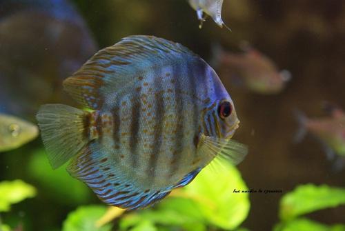 Aquarium des Tropique  26400 Allex