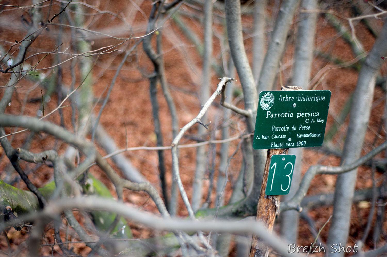 Fiche Parottie de Perse - Jardin des Plantes - Paris