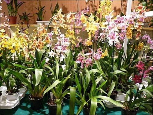 Orchidees-Menton-2011--1-.JPG