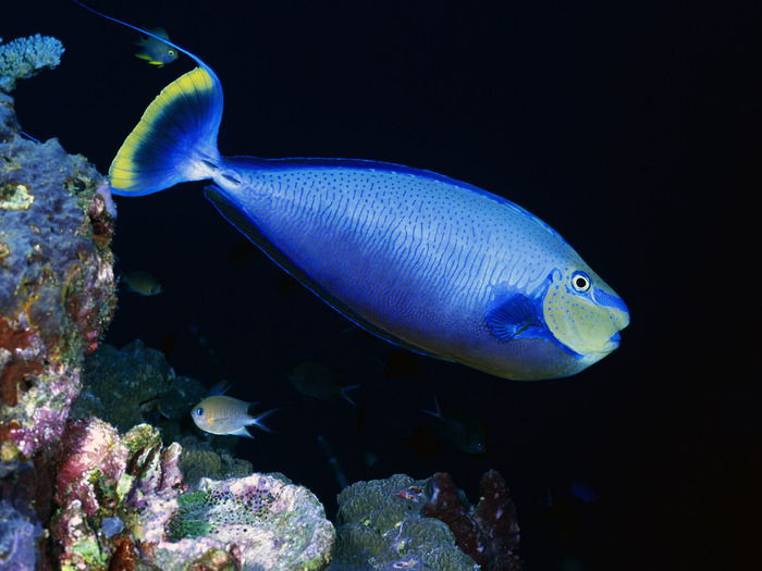 Les Habitants de l'Océan: 10 images